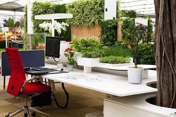 Không nên đặt cây cảnh tùy tiện trong văn phòng
