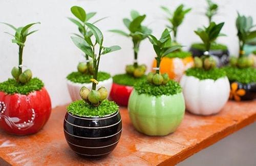 Nên đặt loại cây cảnh gì trên bàn làm việc để tăng tài lộc?