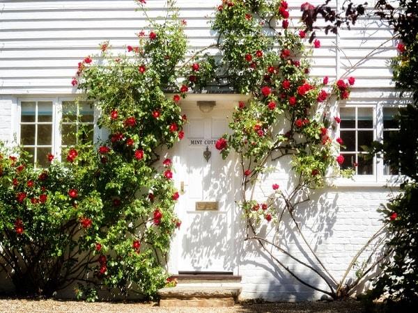 Căn nhà ngập tràn hoa