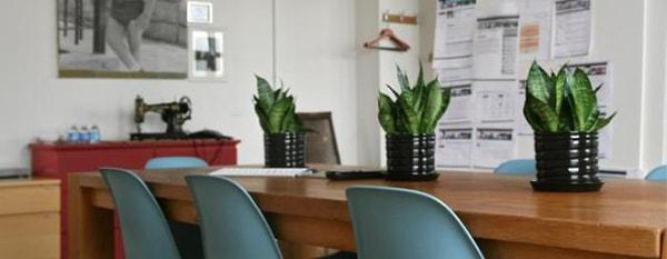 Đặt cây xanh trên bàn làm việc cần lưu ý gì? 2