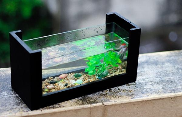 Lưu ý quan trọng khi đặt bể cá cảnh trên bàn làm việc 1