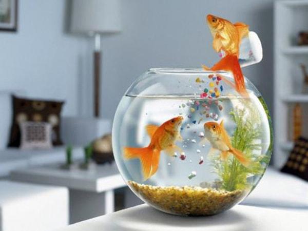 Lưu ý quan trọng khi đặt bể cá cảnh trên bàn làm việc 2