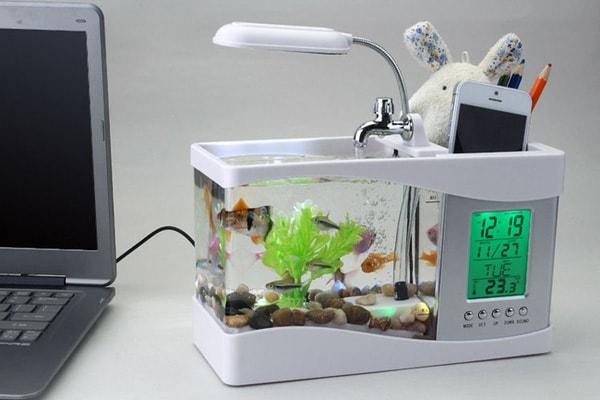 Lưu ý quan trọng khi đặt bể cá cảnh trên bàn làm việc 3