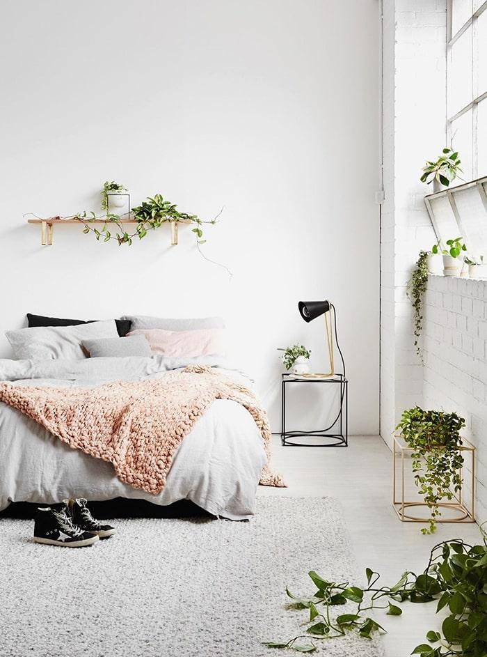 Cây xanh trồng trong phòng ngủ